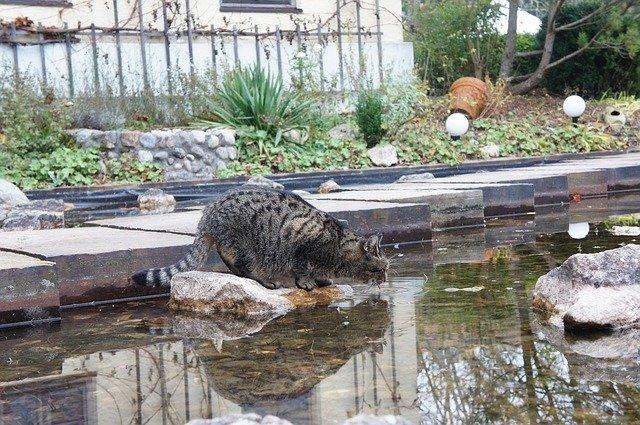 kočka u vody
