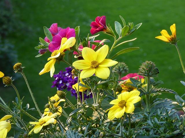 kvetiny u domu